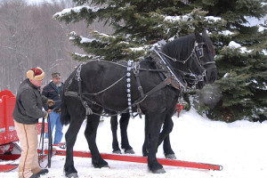 Winter Sleigh Ride Montana